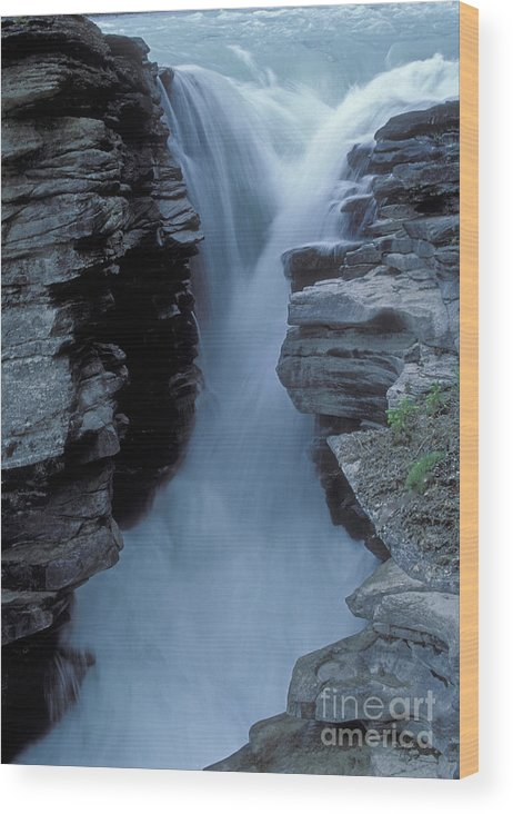 Kicking Horse River Wood Print featuring the photograph Kicking Horse River by Sandra Bronstein
