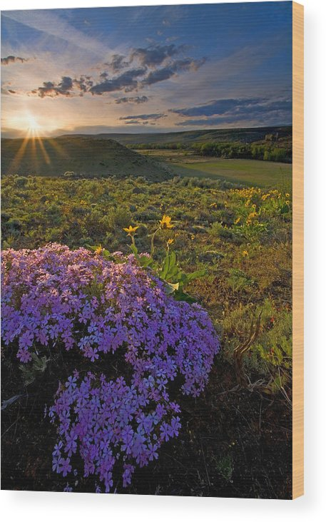 Wildflowers Wood Print featuring the photograph Last Light Of Spring by Mike Dawson