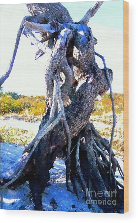 Beach Wood Print featuring the photograph Lovers Entwined Beach Driftwood by Janine Riley