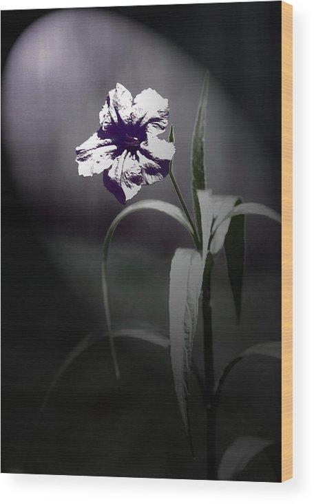 Mexican Petunia Wood Print featuring the digital art Midnight Bloom by Gwen Vann-Horn