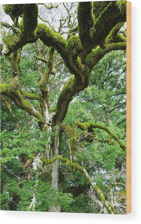 Tree Wood Print featuring the photograph Moss Covered Arms by JoAnn SkyWatcher