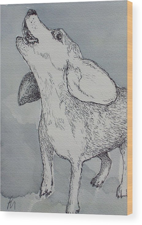 Dog Wood Print featuring the drawing Nootchie by Pete Maier