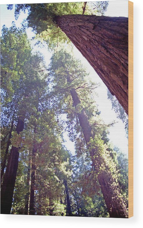 Redwoods Wood Print featuring the photograph Redwood Forest 1 by Steve Ohlsen