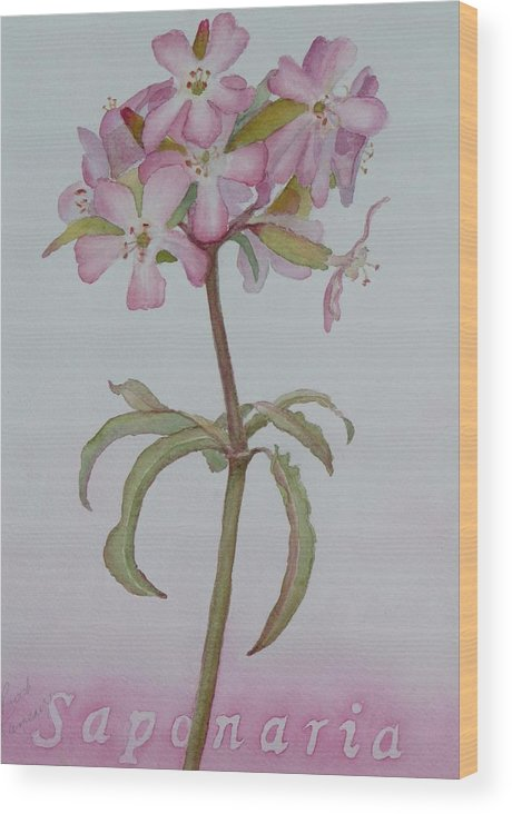 Flower Wood Print featuring the painting Saponaria by Ruth Kamenev
