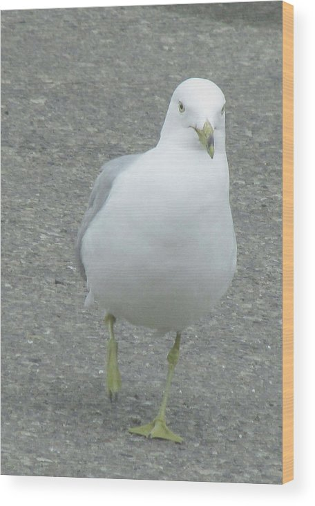 White Bird Wood Print featuring the photograph White Bird Of Alberta by Donna Tanael
