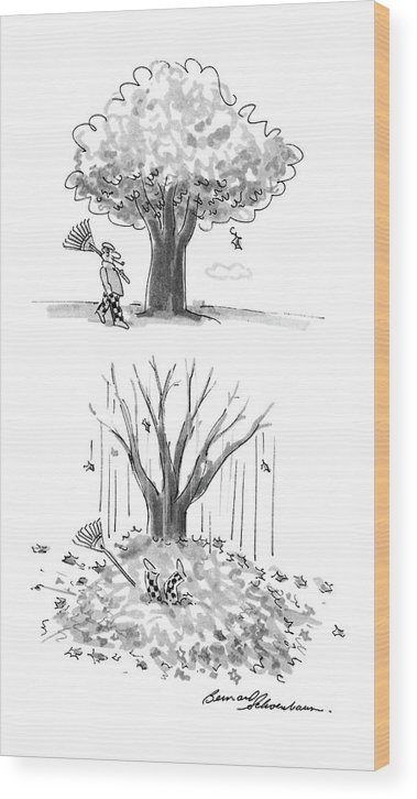No Caption Two Panel Drawing. In The First A Man Is Walking By A Tree With A Rake In His Hand. In The Second All Of The Leaves Have Fallen Off Of The Tree Wood Print featuring the drawing New Yorker October 17th, 1988 by Bernard Schoenbaum