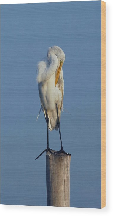 Great Egret Wood Print featuring the photograph Egret 49 by Joyce StJames
