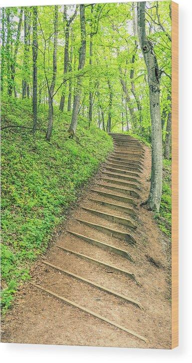 Empire Bluffs Trail Steps In Michigan Wood Print featuring the photograph Empire Bluffs Trail Steps In Michigan by Dan Sproul