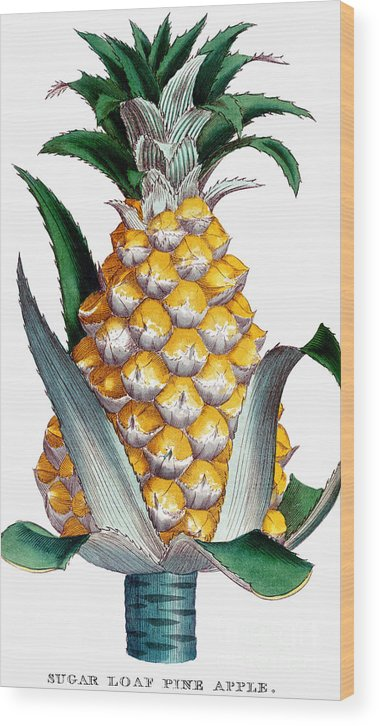 1789 Wood Print featuring the photograph Pineapple, 1789 by Granger