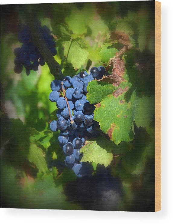 Chateauneuf Wood Print featuring the photograph Chateauneuf Du Pape Hidden Treasure by Carla Parris