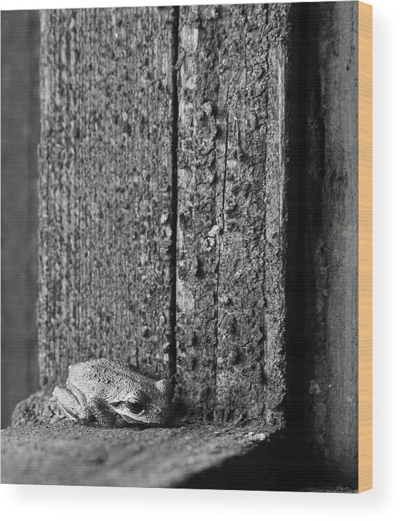 Frog Wood Print featuring the photograph Taking Refuge by Angie Vogel