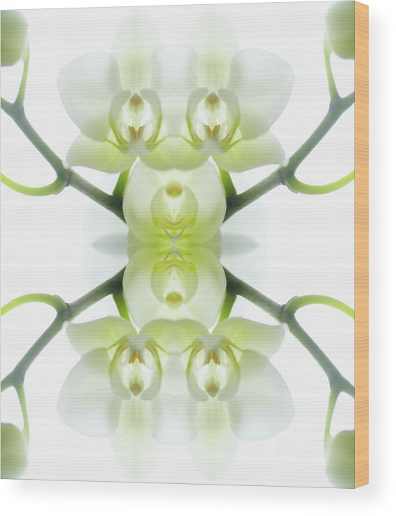 Tranquility Wood Print featuring the photograph White Orchid With Stems by Silvia Otte