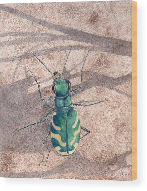 Tiger Beetle - Cicindela Tranquebarica Viridissima Wood Print featuring the painting Tiger Beetle by Inger Hutton