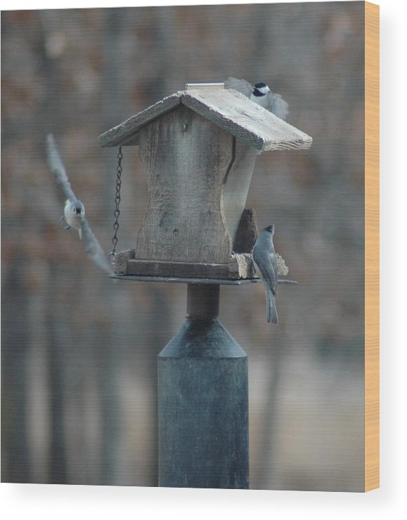 Birds Wood Print featuring the photograph Around The Birdhouse by Julie Clements