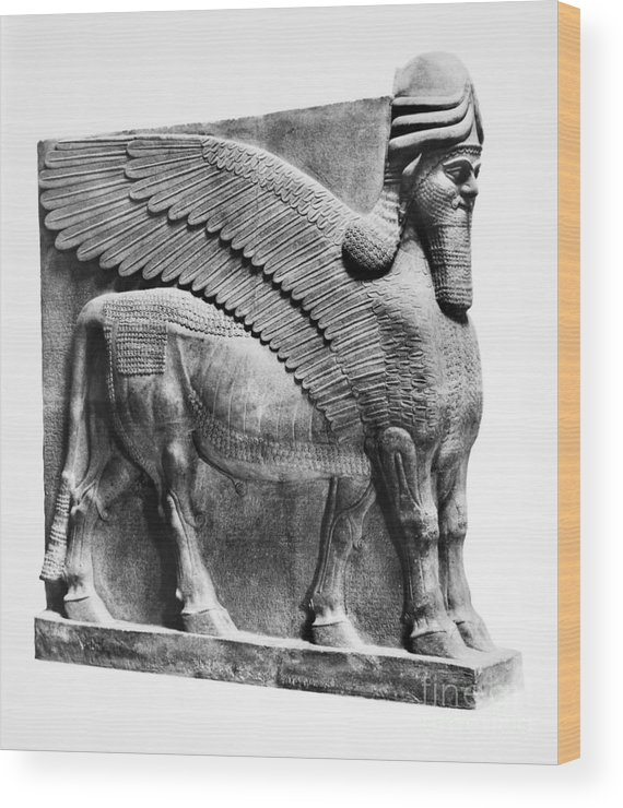 883 B.c Wood Print featuring the photograph Assyria: Bull Scultpure by Granger