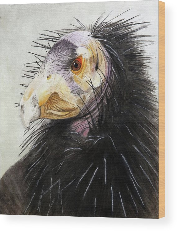 Raptor California Condor Wood Print featuring the painting Sir Condor by Jodi Schneider