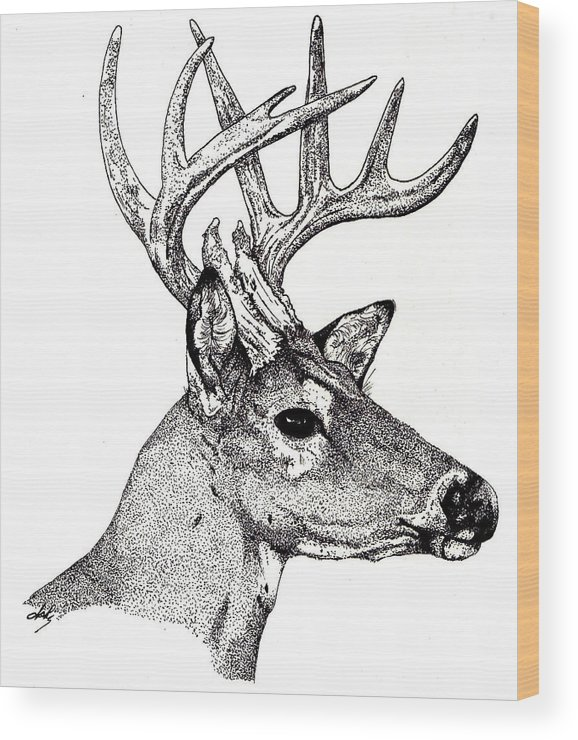Deer Wood Print featuring the drawing Ten Point Buck by Debra Sandstrom