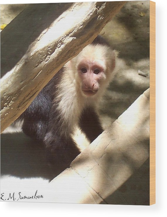 Monkey Wood Print featuring the photograph Wild Little Monkey by Elise Samuelson