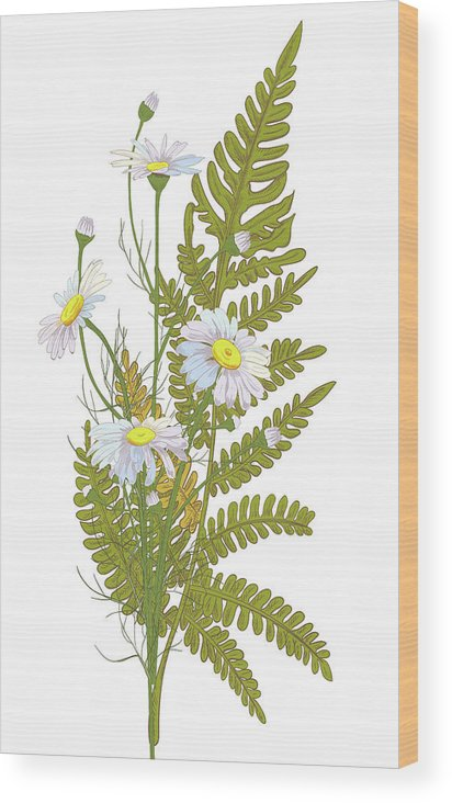 Flowerbed Wood Print featuring the digital art Set Of Chamomile Daisy Bouquets White by Olga Ivanova