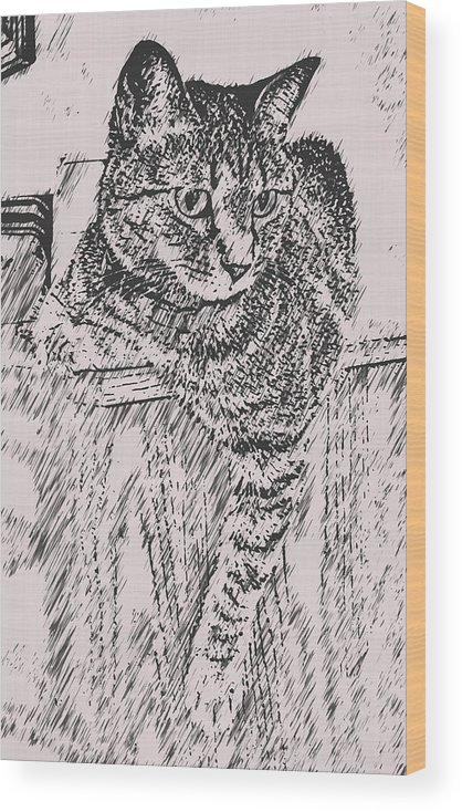 Cat Wood Print featuring the photograph Keeping Watch by David G Paul