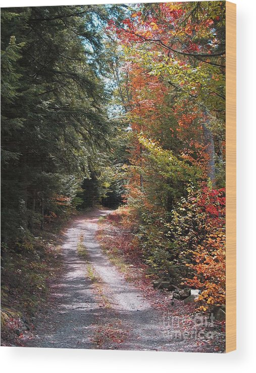 Autumn Wood Print featuring the photograph All Roads Lead Here by Linda Marcille