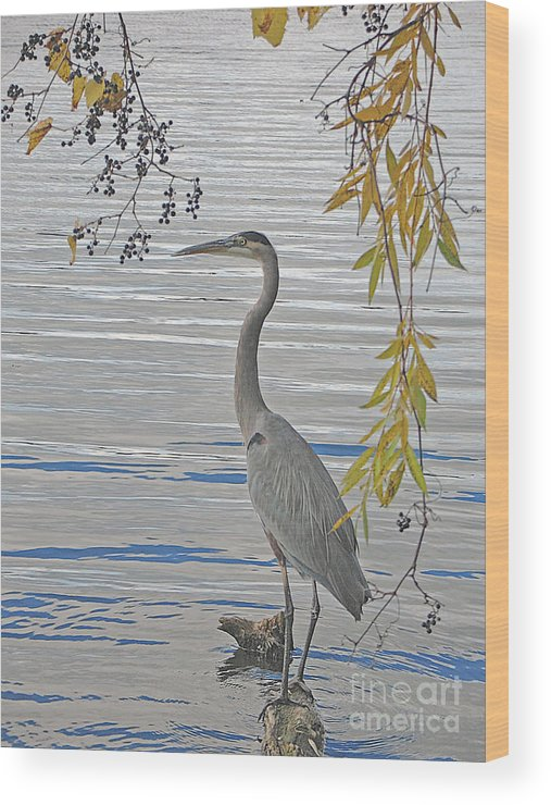 Heron Wood Print featuring the photograph Great Blue Heron by Ann Horn