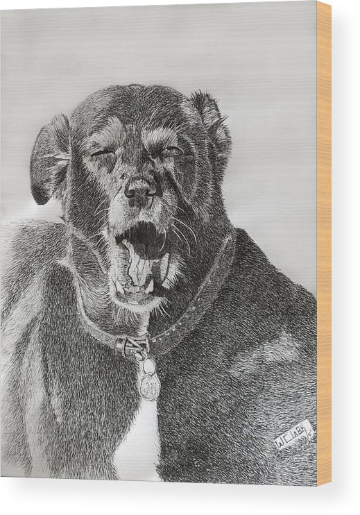 Pen And Ink Wood Print featuring the drawing Patches-the old girls tired by Wade Clark
