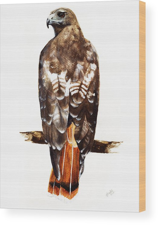 Red Tailed Hawk Wood Print featuring the painting Red Tailed Hawk by Carlo Ghirardelli