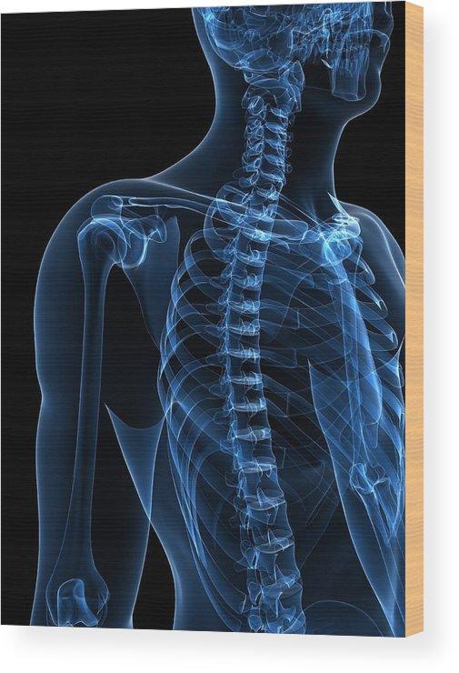 Vertical Wood Print featuring the digital art Upper Body Bones, Artwork by Sciepro