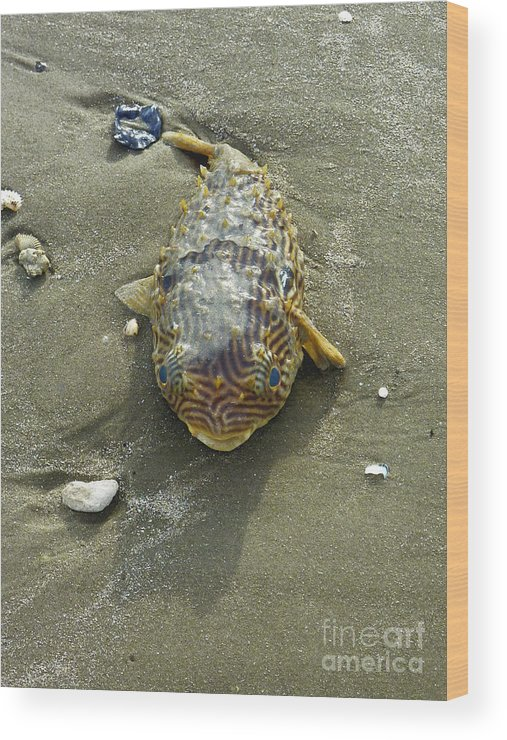 Nature Wood Print featuring the photograph Creatures Of The Gulf - Still Blue Eyes by Lucyna A M Green