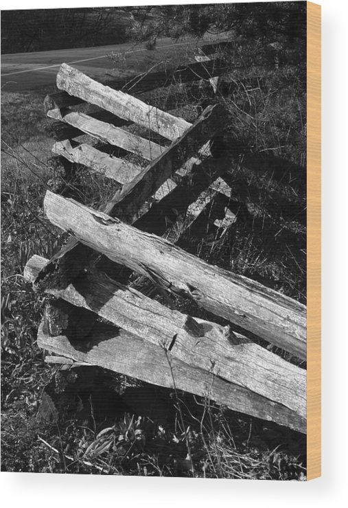 Curtis Neeley Wood Print featuring the photograph OrchardFence by Curtis J Neeley Jr
