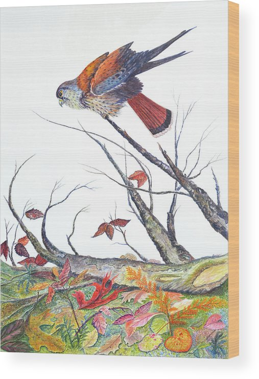 Bird Wood Print featuring the painting American Kestrel by Ben Kiger