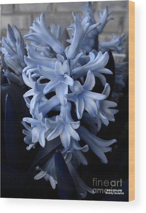 Blue Wood Print featuring the photograph BLue Hyacinth by Shelley Jones