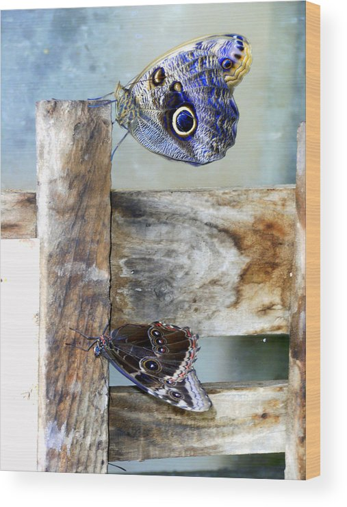 Moths Wood Print featuring the photograph Blue Moths by Mindy Newman