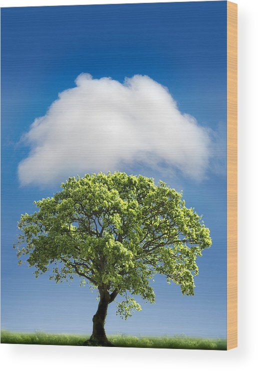 Tree Wood Print featuring the photograph Cloud Cover by Mal Bray