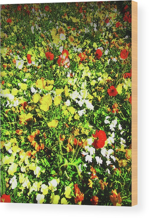 Flowers Wood Print featuring the photograph Colorful by Douglas Barnard