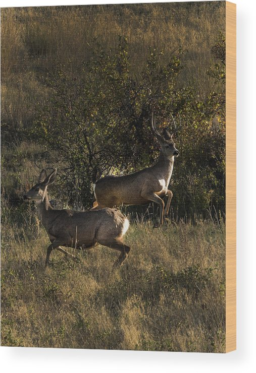 Deer Wood Print featuring the photograph Jumping deer by Roy Nierdieck