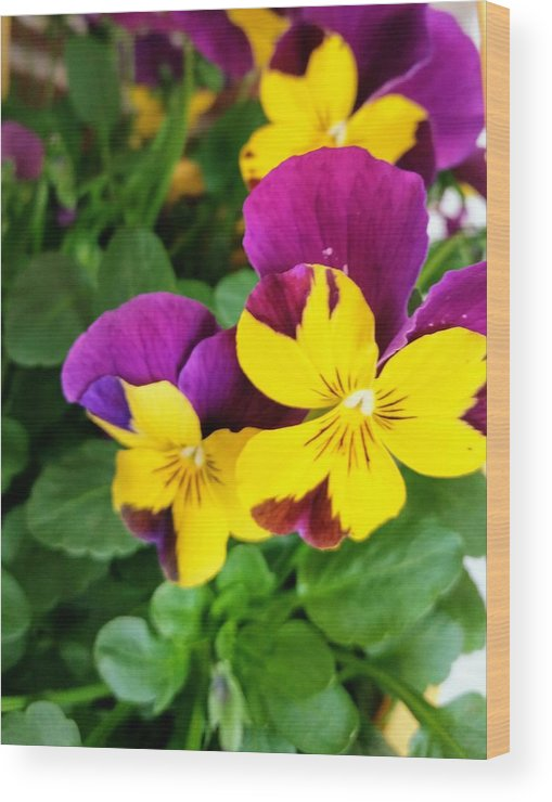 Pansies Wood Print featuring the photograph Pansies 2 by Valerie Josi