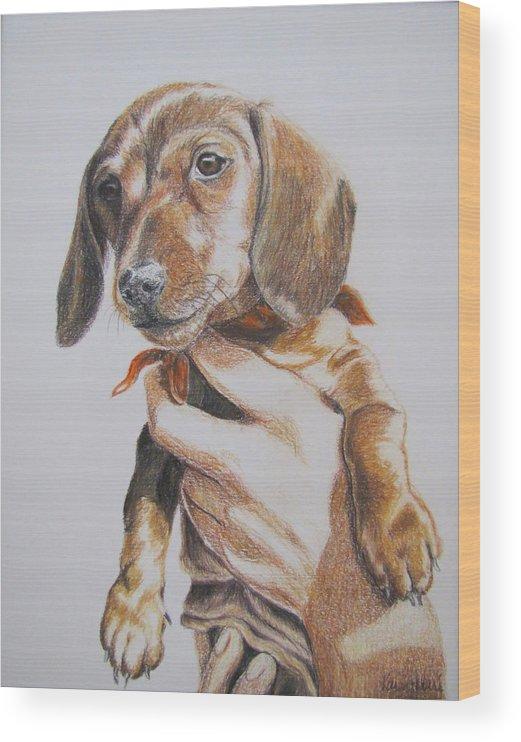 Puppy Wood Print featuring the drawing Sambo by Karen Ilari