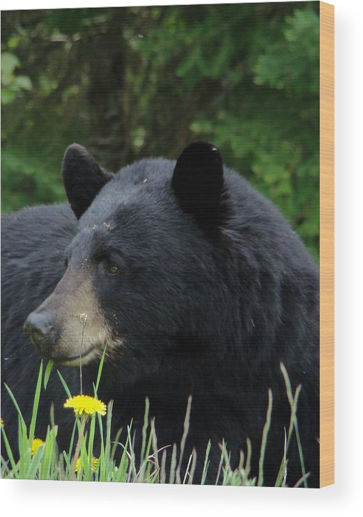 Bear Wood Print featuring the photograph Silly Ole Bear by Tingy Wende
