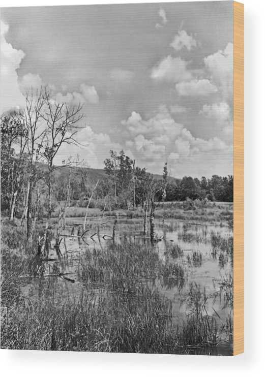 Ansel Adams Wood Print featuring the photograph Swamp by Curtis J Neeley Jr
