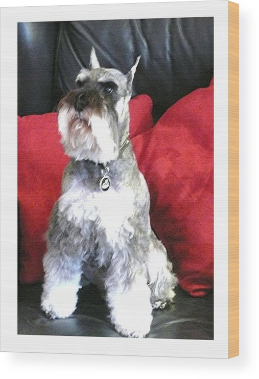 Schnauzer Wood Print featuring the photograph Riley H. - 2019 by David Horning