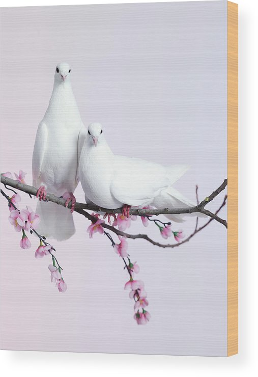 Purity Wood Print featuring the photograph A Pair Of Doves Sat On A Branch With by Walker And Walker