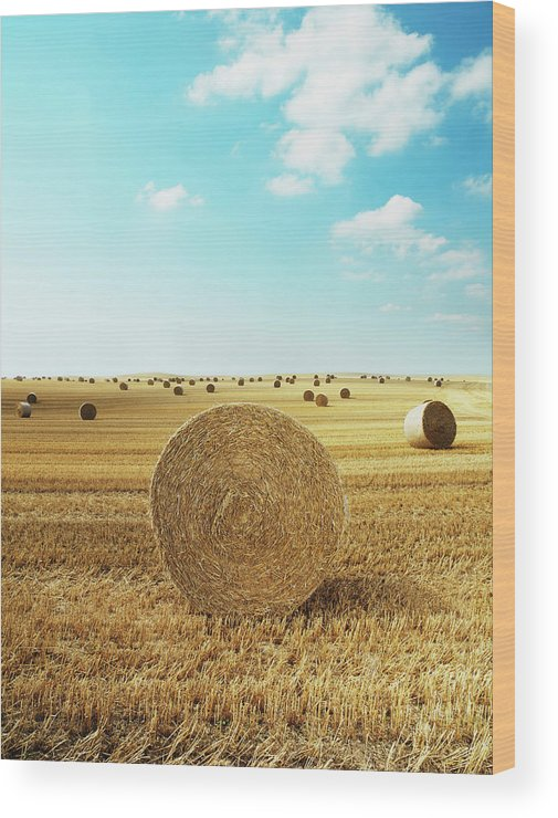 Field Stubble Wood Print featuring the photograph Bales Of Hay In Harvested Field by Henrik Sorensen