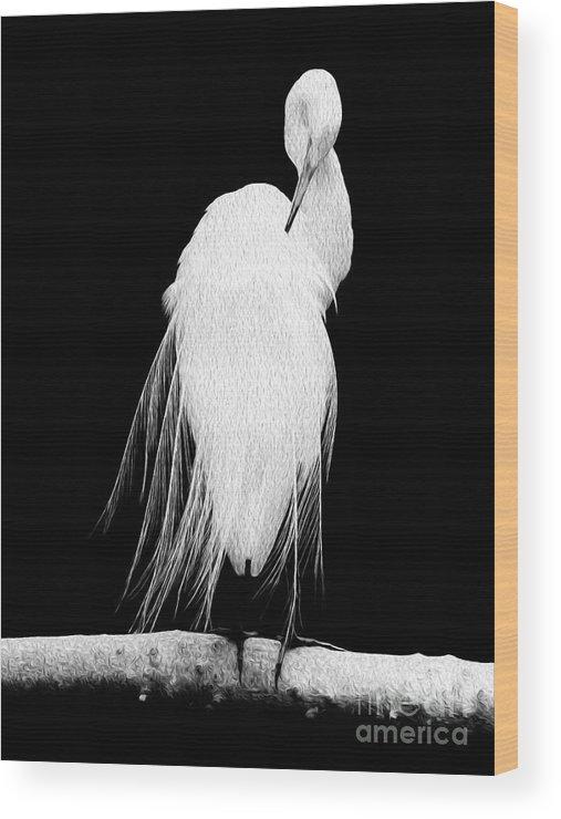 Digital Wood Print featuring the digital art Great Egret In Full Bloom II by Kenneth Montgomery