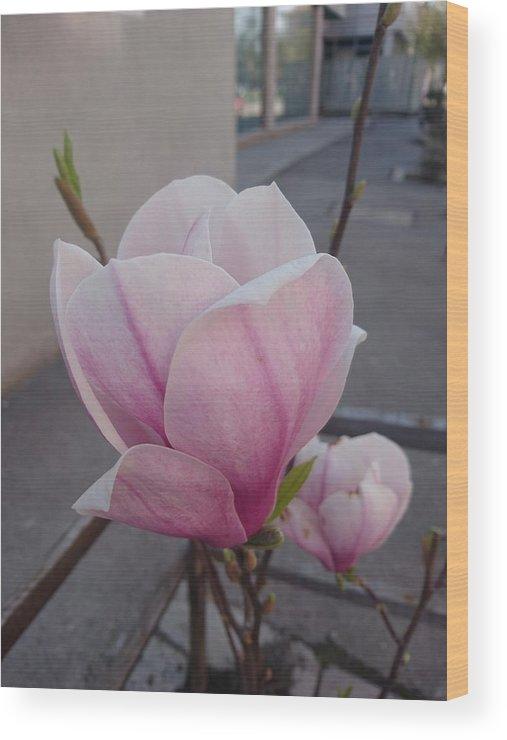 Wood Print featuring the photograph Magnolia by Anzhelina Georgieva