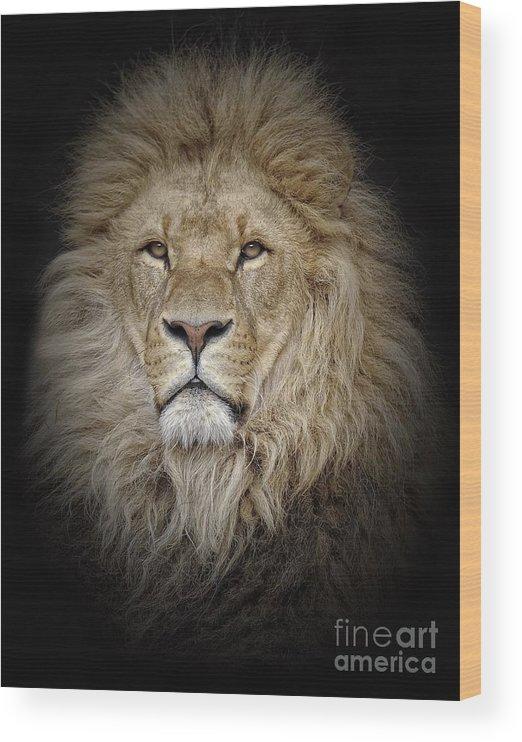 Big Cat Wood Print featuring the photograph Portrait Of Lion Against Black by Stephan Naumann / Eyeem