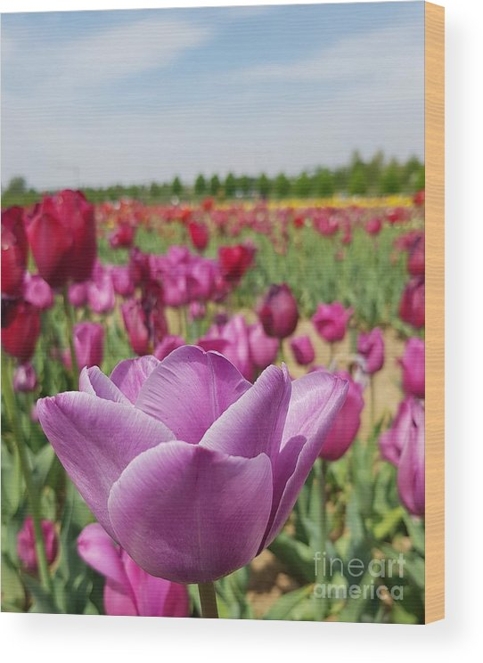 Tulip Wood Print featuring the photograph Purple Tulip by Paola Baroni
