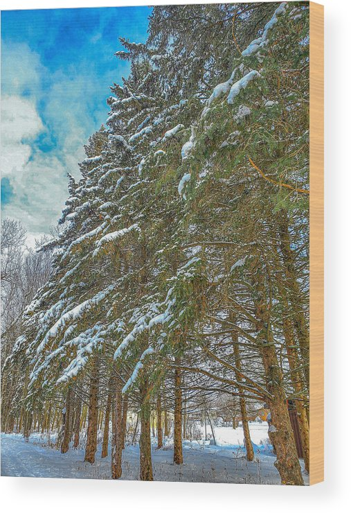 Nature Wood Print featuring the photograph Winter trees by M Forsell