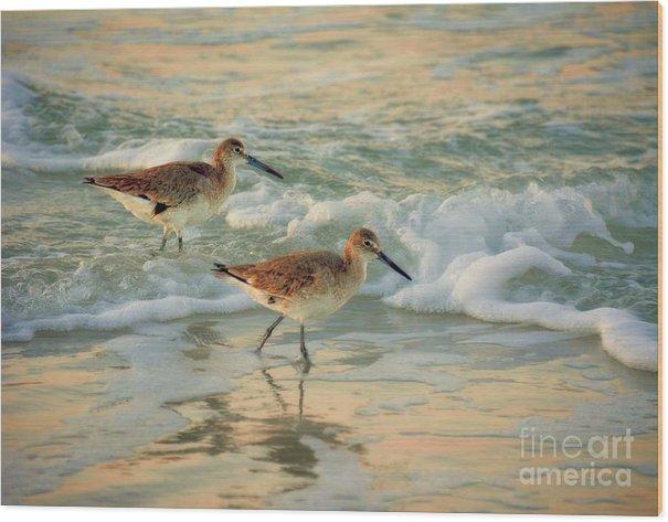 Florida Sandpiper Dawn by Henry Kowalski